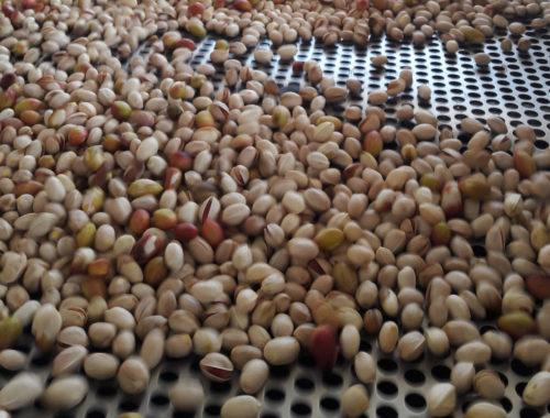 maquinas-procesado-pistacho